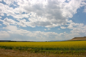 Fields of yellow, clouds of grey