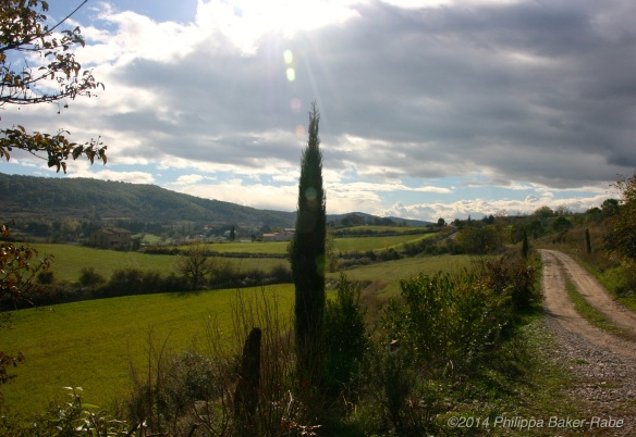 Olive Farm France Ardeche lagorce sunshine