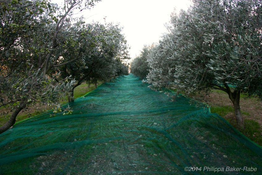 Le filet nets olive farm france lagorce the ardeche region